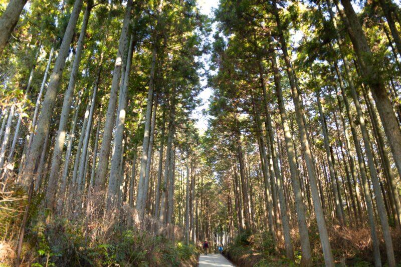 栃木県宇都宮市Carfe(カーフェ)自動車の修理・傷・へこみを格安で | 杉並木の画像